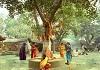 عابد و درخت (داستان اخلاص)